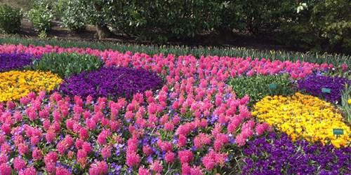 Ces magnifiques premières fleurs